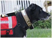 rescue dog collar closeup